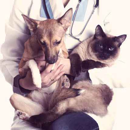 How to Treat Eye Infections in Dogs and Cats