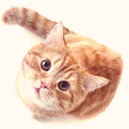 Treating a Low White Blood Cell Count in Cats