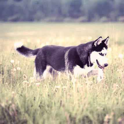 Treatment for Incontinence in Dogs