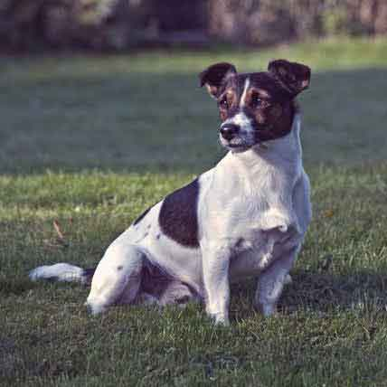 Read Article UKC Recognized Breeds