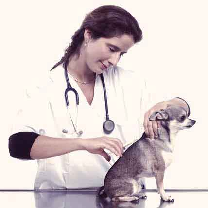 All About Vaccinating Your Dog
