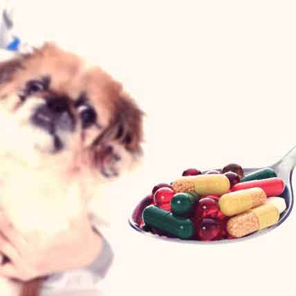 Supplements and Vitamins for Cats and Dogs