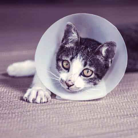 Warning Signs of a Sick Cat