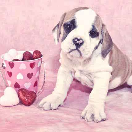 8 Ways to Love Your Pet this Valentine's Day
