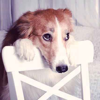 What to Do About Your Dog's Anxiety