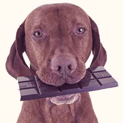 What's Wrong Here? 6 Common Pet Safety Hazards