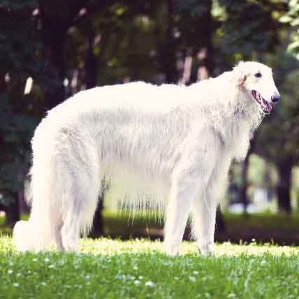 Wonderfully Weird Dog Breeds