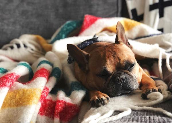 Is your dog getting enough sleep?