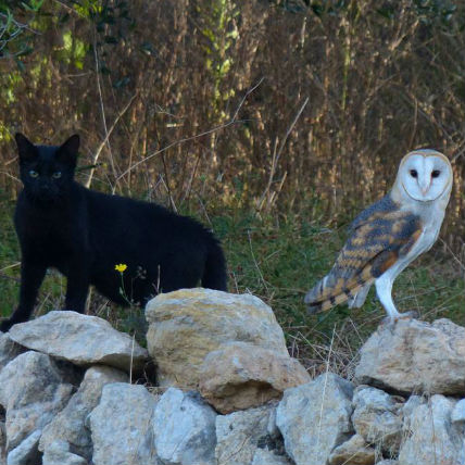 Cat and Owl are Best Friends - A Must Watch Video