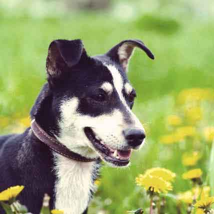 5 Reasons Mixed Breed Dogs Make Great Pets