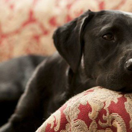 Read Article Are People Prejudiced Against Black Pets? Understanding Black Dog Syndrome