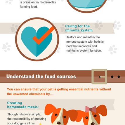 Feed Your Dog The Best - Keep Your Pet Happy and Healthy