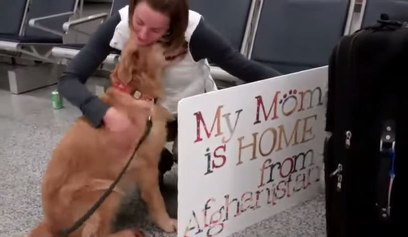 Dog Greets Veteran Mom at Airport, Can't Stop Crying from Joy