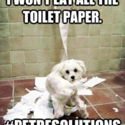 #PetResolutions 2013 Giveaway!