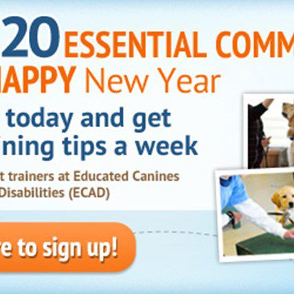 Expert Dog Training eSeries Brought to You in Partnership with ECAD!