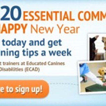 Become a Dog Training Expert in Just 10 Weeks