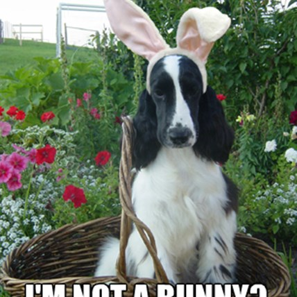 Happy Easter from PetCareRx!