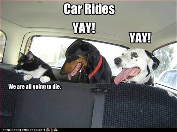 pets-in-the-car-funny-pets