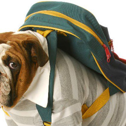 7 Ways to Fight Separation Anxiety in Pets: Back-to-School Edition
