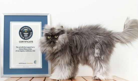 Colonel-Meow-Blog