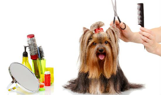 Pampered-Grooming-Blog
