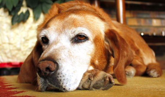 hospice-care-for-pets