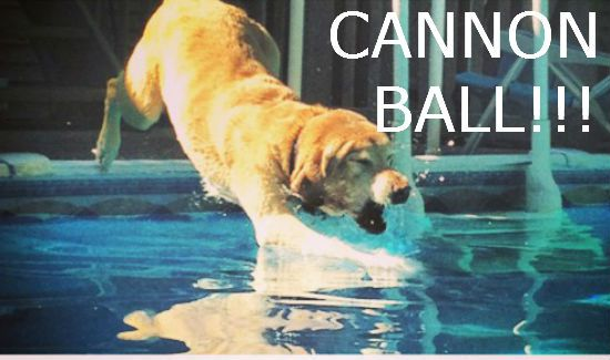 Dog-Cannon-Ball