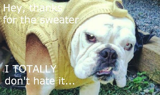 Dog-Hates-Sweater