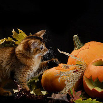 The Only Pet Halloween Guide You'll Ever Need