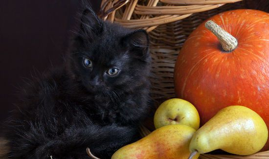 black-cat-blog