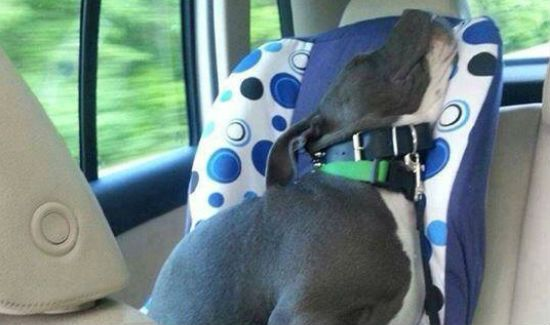 dog-in-carseat-blog
