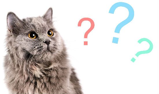 Answer-Your-Cats-Question-Blog