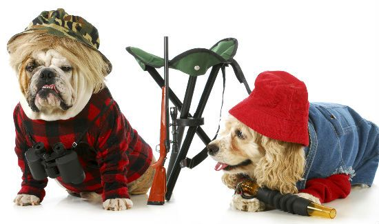 Dress-Up-Your-Pet-Day-Blog