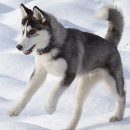 Read Article 4 Olympic-Worthy Winter Sports to Try With Your Dog