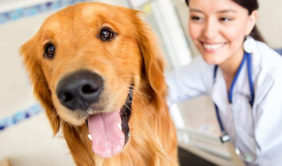 6 Tips for a Stress-Free Vet Visit