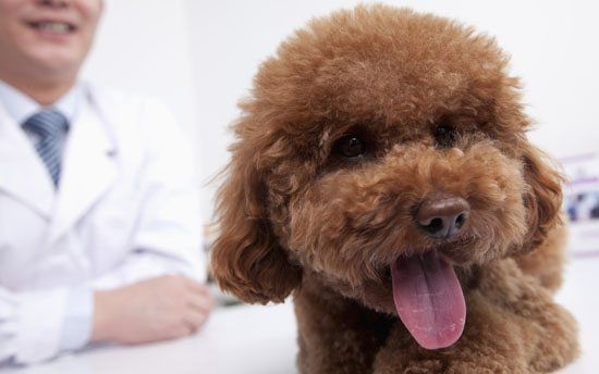 14 Questions Your Vet Will Ask You
