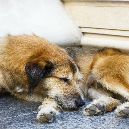 Devoted Dog Waits for Days Outside Hospital for Sick Owner