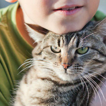Brave Cat Protects 5-Year-Old from Gang of Bullies