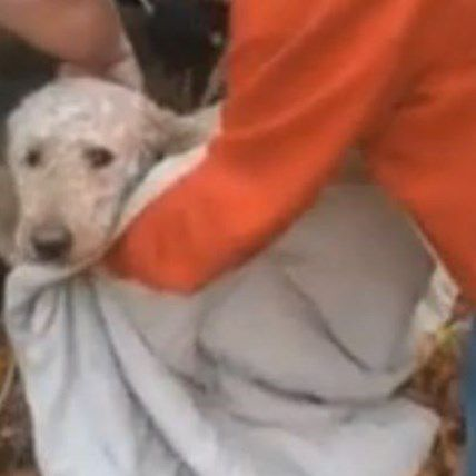 Dog Falls Down 30-Foot Well, Comes Out Unharmed