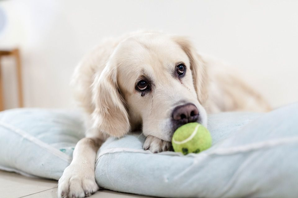 How Can I Help My Pet Deal With Grief?