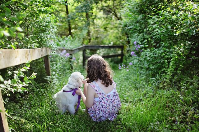 How can you teach your child to train your dog?