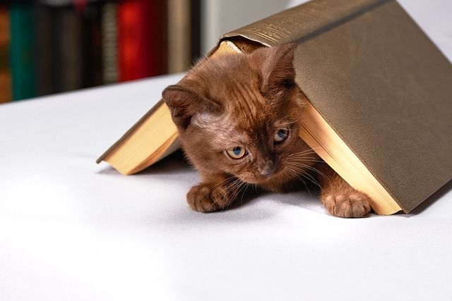 Best Books to Read on Cat Training