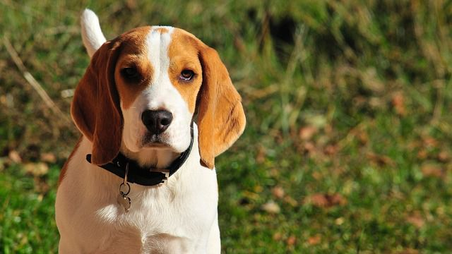 The best hunting dog breeds you must look for!