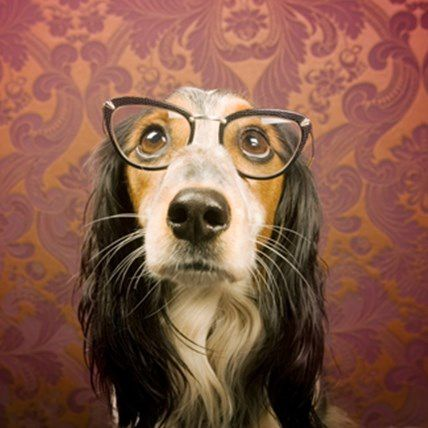 Read Article Worried About Your Dog's Eye Health?