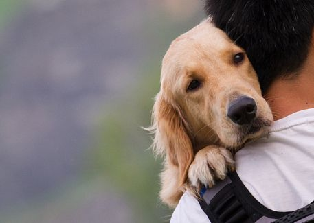Cure Your Dog's Back-to-School Blues