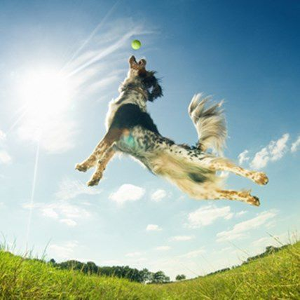 The Top 5 Dog Medicines for a Healthy, Outdoor Dog